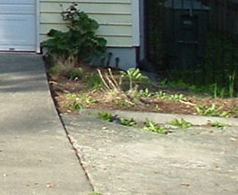 The weedy planting area was an eyesore and limited the parking space.